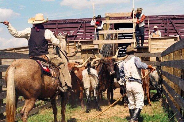 50bce5a12 Houston te invita a explorar las tradiciones y la cultura texana en ...